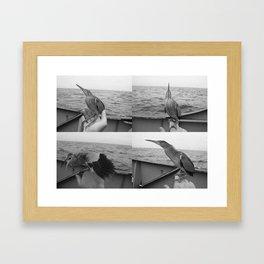 bittern Framed Art Print