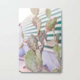 cactus in the evening Metal Print