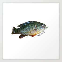 SoloShift Sunfish Art Print