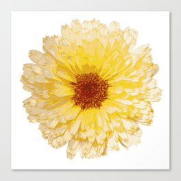 Beautiful Yellow Marigold Vector Isolated Canvas Print