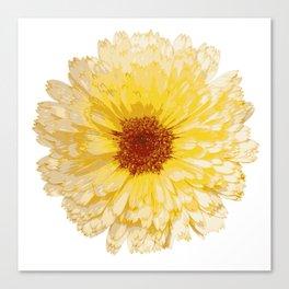 Beautiful Yellow Marigold Vector Isolated Canvas Print