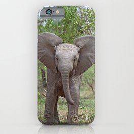 Small Elephant - Africa wildlife iPhone Case