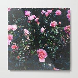 city of roses Metal Print