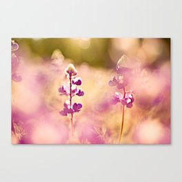Let the sun soak in Canvas Print