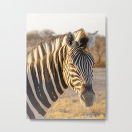 Lone Zebra - Head only, portrait Metal Print