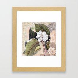 Vintage White Magnolia Framed Art Print
