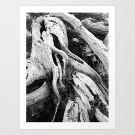 our roots go deep.  Art Print