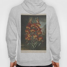 Reinagle, Philip (1749-1833)  - The Temple of Flora 1807 - Superb Lily Hoody