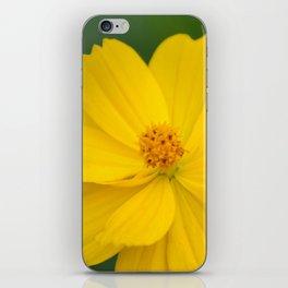 Coreopsis 2 iPhone Skin