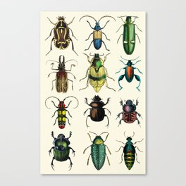 Jeweled Beetles  Canvas Print