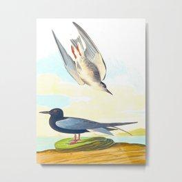 Black Tern Metal Print