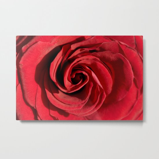 Red rose in LOVE- Roses Flowers Floral Metal Print