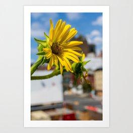 Yellow Flower in NYC Art Print