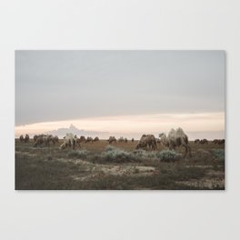 Tribe of Camels in the Kazakh desert Canvas Print