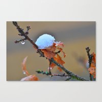 copper Canvas Prints featuring Copper by Best Light Images