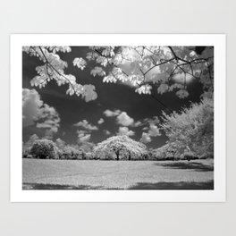 Digital Photography Art Print