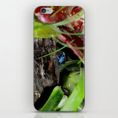 Poison Dart Frog- Young Froglet iPhone & iPod Skin
