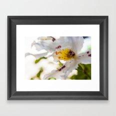 Orchid White Framed Art Print