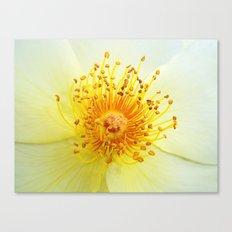 Rosa Golden Wings Canvas Print
