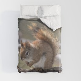 Red Squirrel Comforters