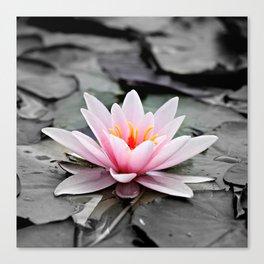 Pink Lotus Flower Waterlily Canvas Print