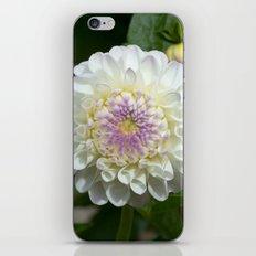 Gaylen Rose Dahlia iPhone Skin