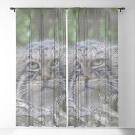 Wild Cat Sheer Curtain