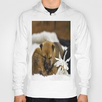 shiba inu Hoodies featuring Red Shiba Inu Puppy by Blue Lightning Creative