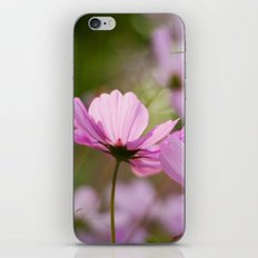 Cotton Candy Cosmos iPhone & iPod Skin