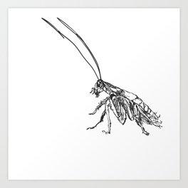 Cucaracha #6 Art Print