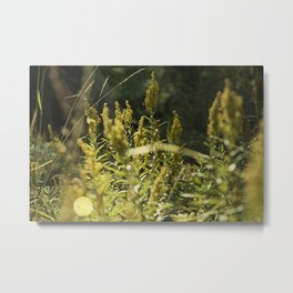 Mountain Meadows 01 Metal Print