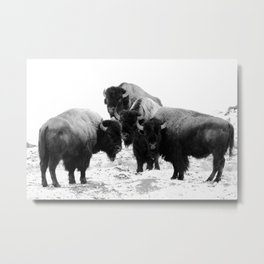Bisons, buffalos Metal Print