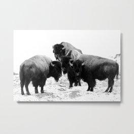 Bisons, buffalos Metal Print