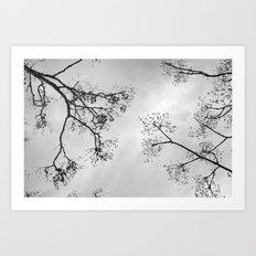 Zen Trees.... BW Art Print