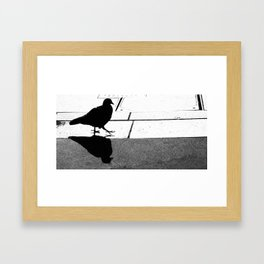 Pigeon Having a Late Afternoon Stroll Framed Art Print