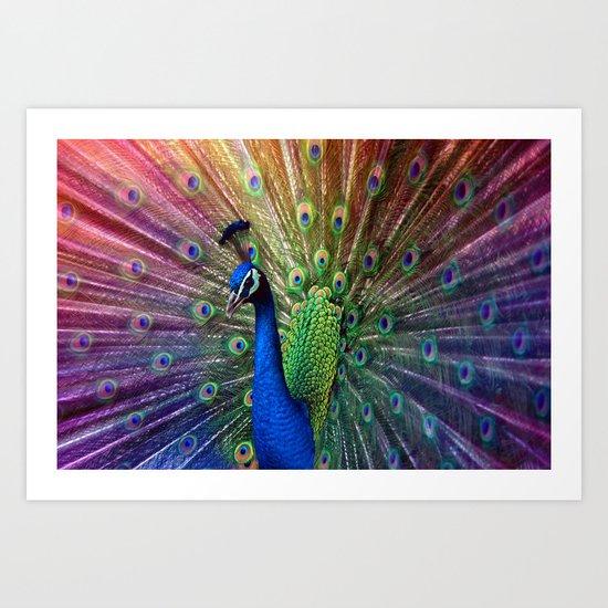 the peacock Art Print