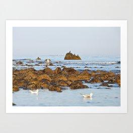 White Island lighthouse Art Print