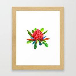 Waratah Framed Art Print
