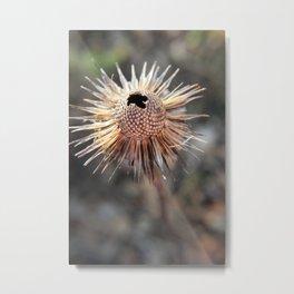 Seed Pod Parasol Metal Print