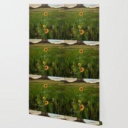 Sunflowers on the Western Prairie - Flowers and Landscape Near Scottsbluff Nebraska Wallpaper