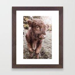 Dreamy Highland cattle calf Framed Art Print