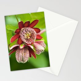 Passiflora 3 flowers 428 Stationery Cards