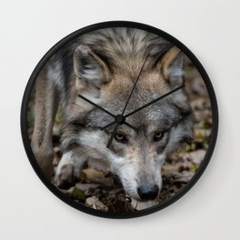 Mexican Gray Wolf Wall Clock