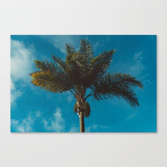 Palm Tree II Canvas Print