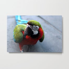 Polly Want a Cracker Metal Print