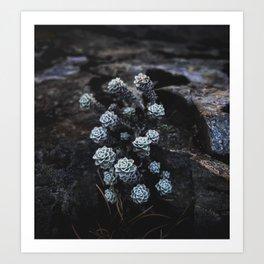 Wildflower Series - Avalanche Peak Art Print