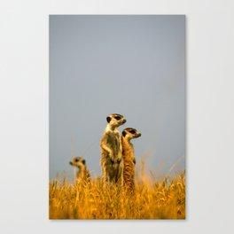 Kalahari Meerkats Canvas Print