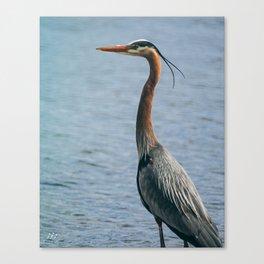Bird Watching Canvas Print