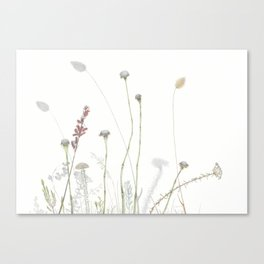 Liebetland Flowers Amongst The Fynbos, 2018 Canvas Print