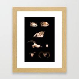 Skull Cabinet Framed Art Print